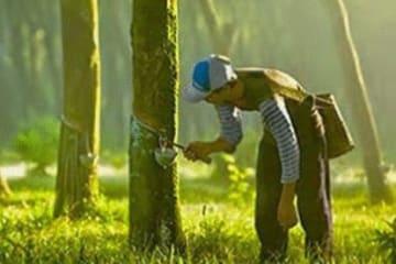インドネシア・ゴム業者協会は、今年の天然ゴム産業の業績が改善すると予想する(同協会ホームページより)