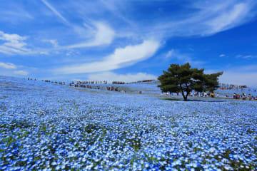 【GW2019おすすめスポット】お花畑に圧倒される!東京近郊絶景6選