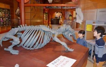 デスモスチルスの化石のレプリカなどが並ぶ会場