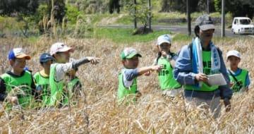 ベッコウトンボを数える子どもたち=薩摩川内市祁答院の藺牟田池