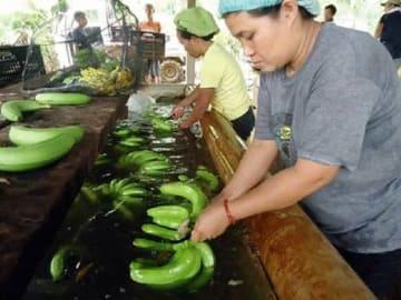 バナナ生産者輸出業者協会(PBGEA)は、日本への出荷が滞ることに懸念を示した(インクワイラー提供)