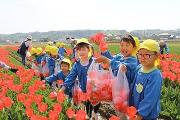 園児がチューリップ花摘み 富山・杉谷