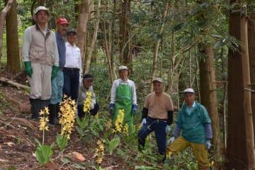 花立公園に咲いたエビネランと、手入れをしている北郷町えびね蘭愛好会のメンバー
