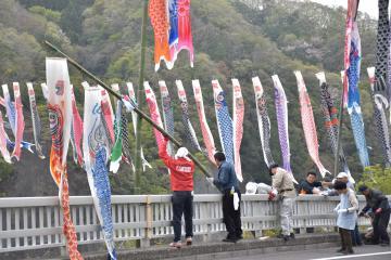 竜神大吊橋周辺でこいのぼりの設置作業を行う関係者=常陸太田市天下野町