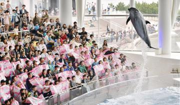 アクアワールド県大洗水族館のイルカショーを楽しむ人たち。昨年のゴールデンウイークも多くの家族連れでにぎわった=2018年5月3日午後、大洗町磯浜町
