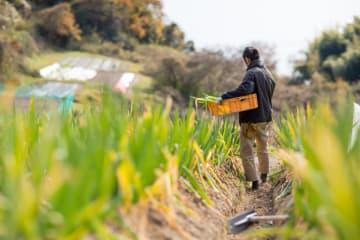 リスク管理面から農業の6次産業化支援 農薬飛散、食中毒やドローン事故など多様な賠償に対応