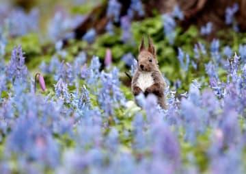 홋카이도에 찾아온 봄