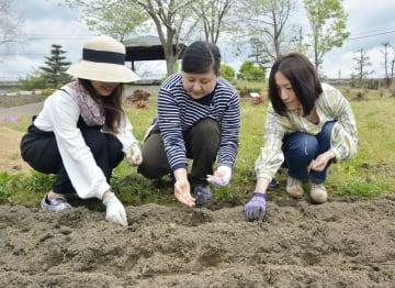 西日本豪雨で被災した岡山県倉敷市真備町地区の公園で、「はるかのひまわり」の種を植える住民ら=26日午前