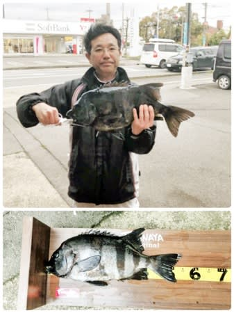 片岡さんが釣り上げた、56センチのイシダイ
