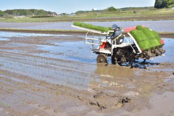 県内で田植えが最盛期を迎えている=阿見町
