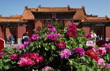 「国色天香-紫禁城の牡丹」展、故宮博物院で開催