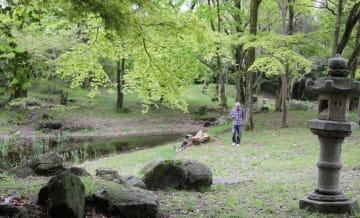 特別公開されているお浜御殿の庭園。観光客が散策を楽しんでいた(彦根市松原町)