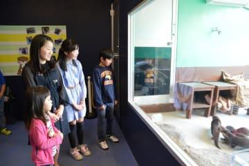 コツメカワウソの赤ちゃん4匹の名付け親となった子どもたち=箱根園水族館