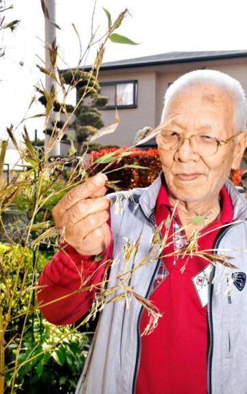 開花した竹の花をめでる久保さん