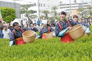 狭山新茶の手摘みを披露する茶娘衣装の女性たち=2日、入間市役所茶園