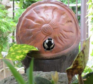 置物の穴から出入りする親鳥