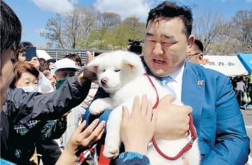 観客らに新たな愛犬「さくら」をお披露目する元横綱朝青龍関