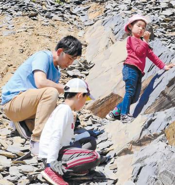 化石を探す参加者