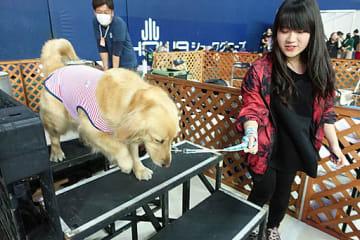 災害時を想定した道を愛犬と共に体験する来場者=5日、大阪市西区の京セラドーム大阪