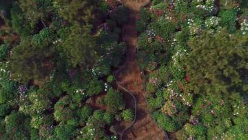 美しく咲き競うボタン 河北省渉県