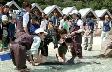 イルカと触れ合う家族連れ。大分マリーンパレス水族館「うみたまご」はゴールデンウイーク期間中の入場者数が前年同期比で41.9%増えた=4月27日、大分市