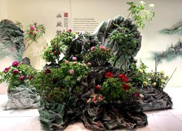 ボタンとシャクヤクの国際コンテストを開催 北京園芸博