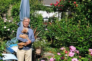 バラが咲き乱れる野崎さんの自宅の庭=相模原市中央区由野台