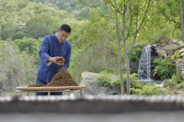 太行山脈に漂うお茶の香り 河北省臨城県