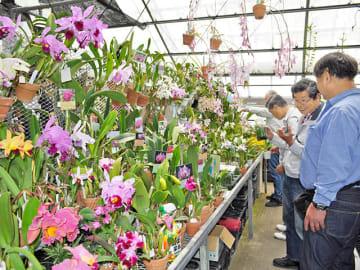 春の蘭展で展示販売されている色とりどりのラン=大垣市馬の瀬町、大垣園芸