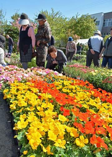 色鮮やかな花々を品定めする来場者