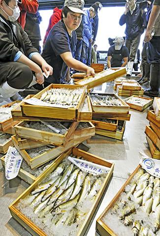 競り落とされた初物の天然鮎=11日午前6時5分、岐阜市茜部新所、市中央卸売市場
