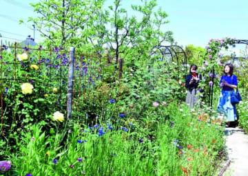 個性豊かな庭を楽しむ来場者=阿波市吉野町柿原