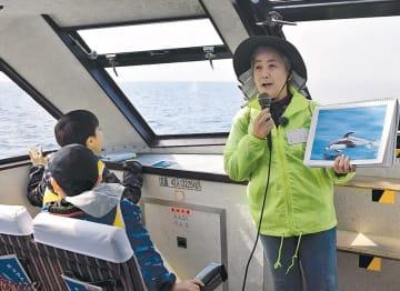陸奥湾で始まったイルカウオッチングツアー