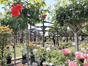 リニューアルに伴い新たに誕生した「バラの回廊」=11日、大阪市東住吉区の市立長居植物園