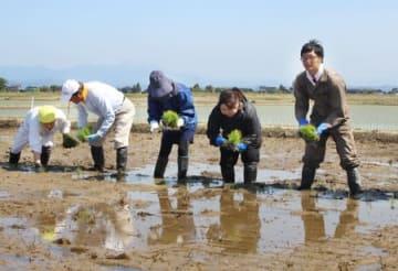 「令和」の文字を描く田んぼアートの田植え=12日、新潟市西蒲区
