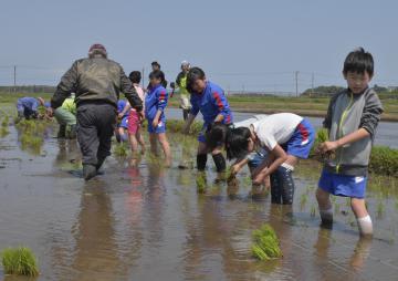 今年で5年目を迎えた「ふゆみずたんぼプロジェクト」に参加し、田植え体験を楽しむ児童たち=鉾田市安塚