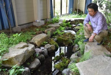ホタルの幼虫を飼育する室内ビオトープを観察する竹林支部長