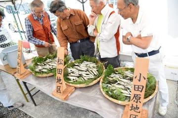 釣果を確認する組合員ら=小田原市桑原の酒匂川漁協事務所