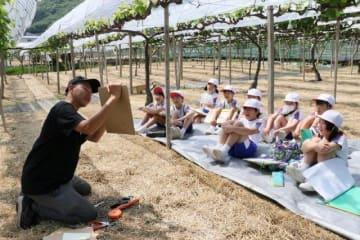 ブドウについて勉強する児童たち
