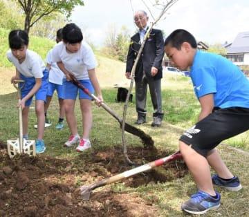 小山尚元さん(奥)が見守る中、ドイツカシワの苗木に丁寧に土をかぶせる柏台小児童