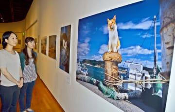 全国各地に住む猫たちの表情を集めた岩合さんの写真展=川崎市中原区の市市民ミュージアム