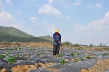 雲南省各地で干ばつ 農作物被害面積が400万ムー以上に