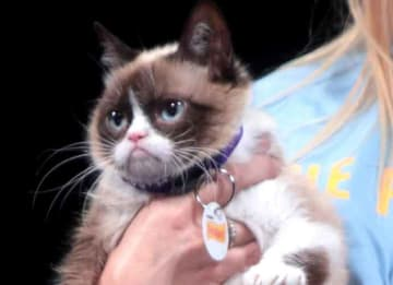 Grumpy Cat, The Internet's Favorite Cat, Dies At Age 7
