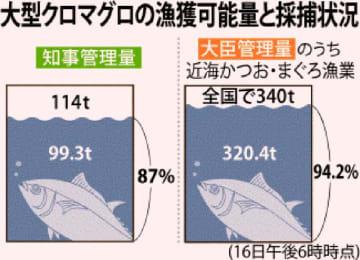 大型クロマグロの漁獲可能量と採捕状況