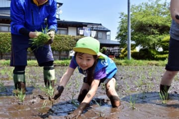 泥に苦戦しながらも田植えを楽しむ園児