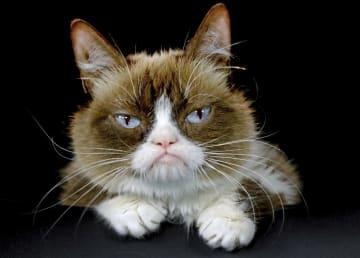 死んだ不機嫌顔の雌猫=2015年12月(AP=共同)