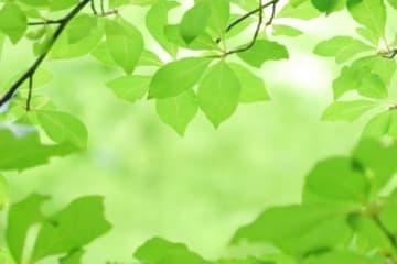 横浜市保土ヶ谷区の「カーリットの森」でホタル観察会