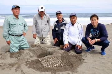 アカウミガメの卵を確認した吉本さん(左)ら調査員