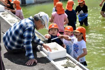 プールの底からすくい上げた泥の中からヤゴを探す児童