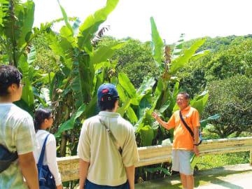 大宜味村喜如嘉の特産品「芭蕉布」の原材料のバショウを観光客に案内するオクマ プライベートビーチ&リゾートの大山さん(同ホテル提供)